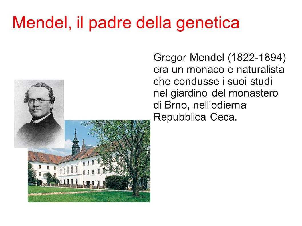 Mendel, il padre della genetica Gregor Mendel (1822-1894) era un monaco e naturalista che condusse i suoi studi nel giardino del monastero di Brno, nell'odierna Repubblica Ceca.