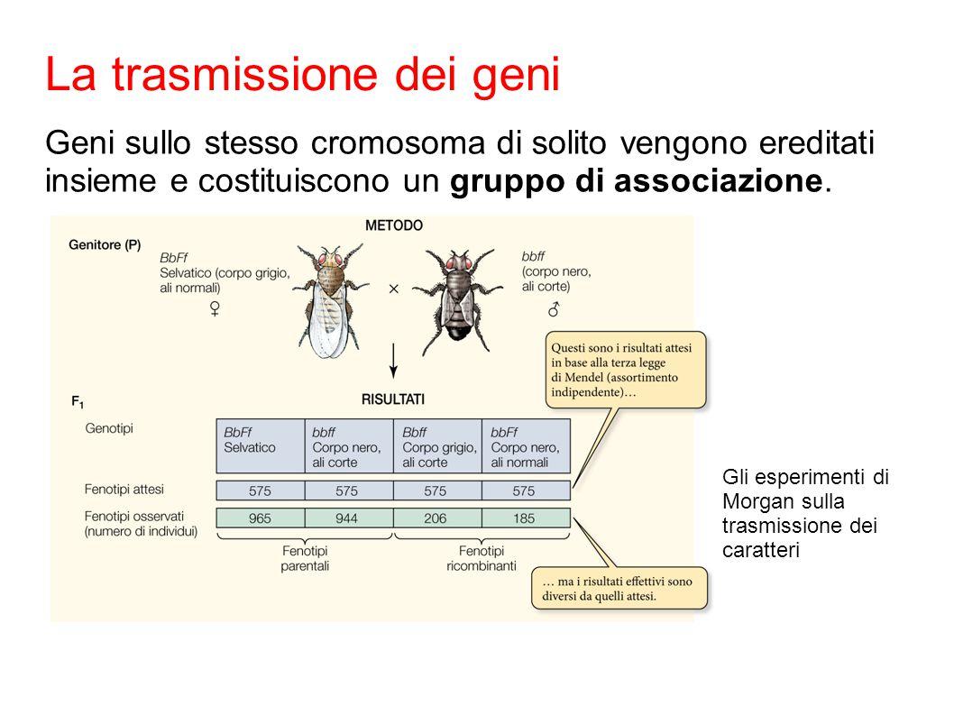 Geni sullo stesso cromosoma di solito vengono ereditati insieme e costituiscono un gruppo di associazione.