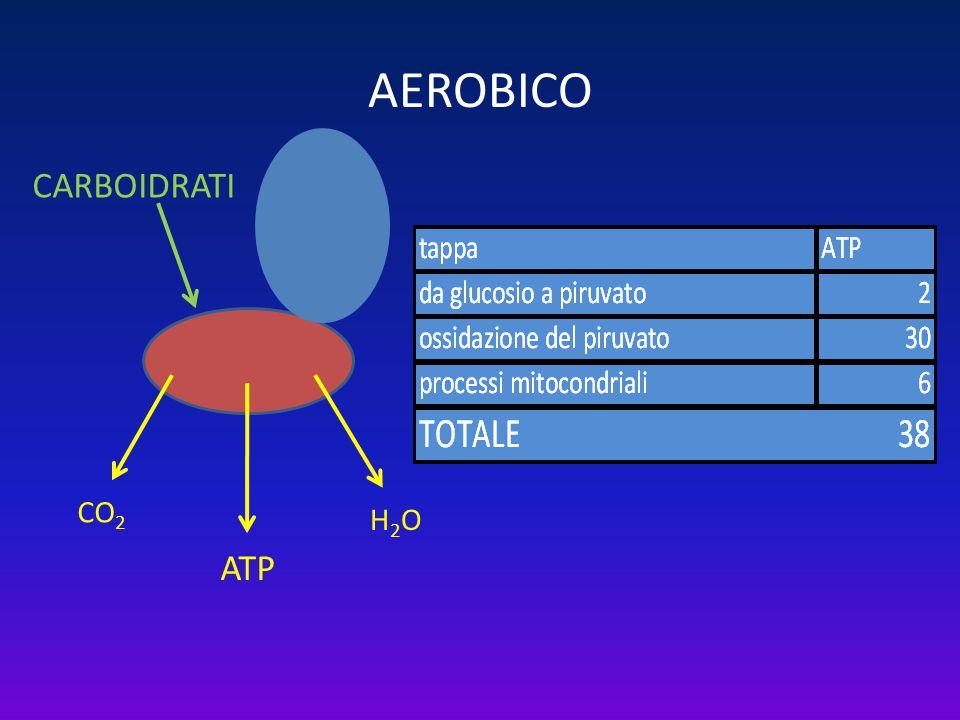 AEROBICO CARBOIDRATILIPIDI ATP CO 2 H2OH2O