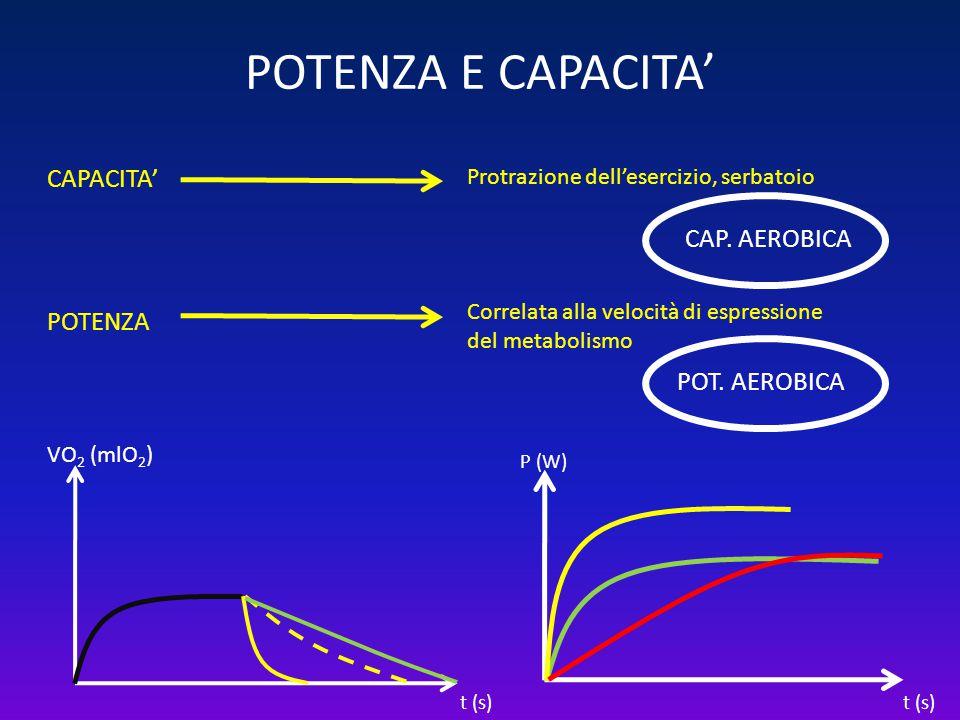 POTENZA E CAPACITA' t (s) P (W) CAPACITA' POTENZA Protrazione dell'esercizio, serbatoio Correlata alla velocità di espressione del metabolismo POT. AE