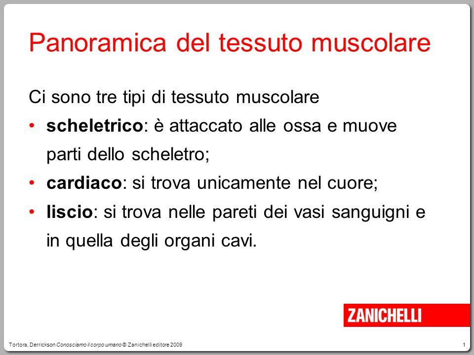 1 Panoramica del tessuto muscolare Ci sono tre tipi di tessuto muscolare scheletrico: è attaccato alle ossa e muove parti dello scheletro; cardiaco: s
