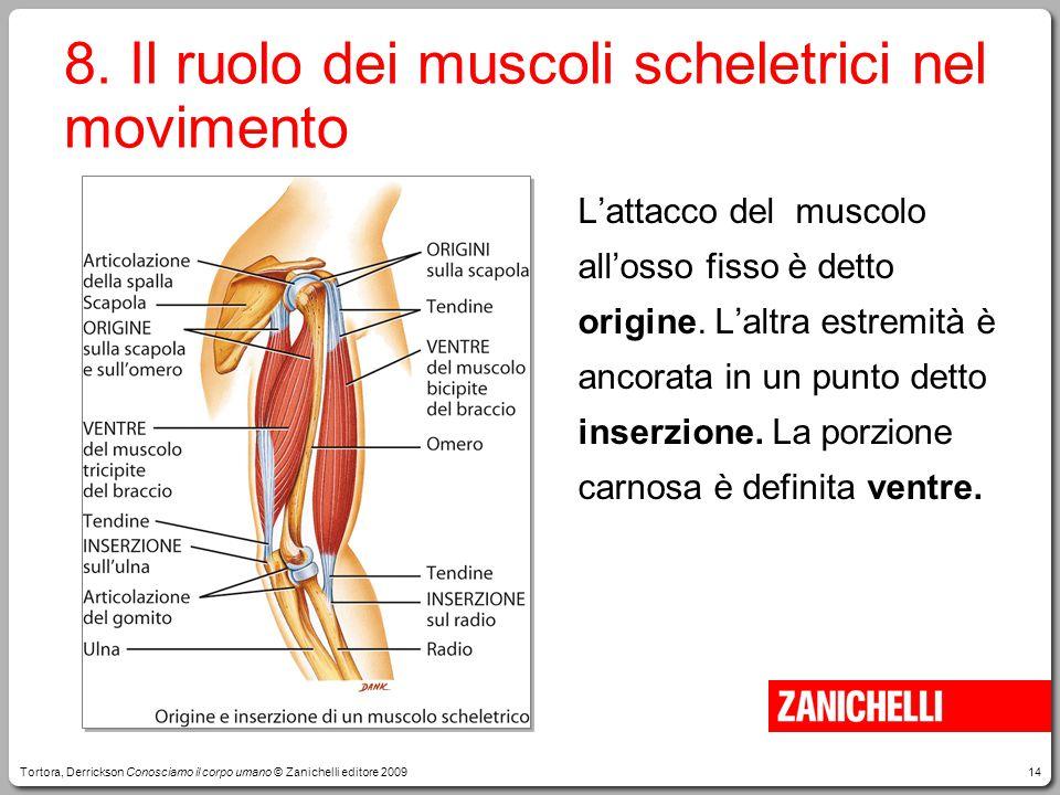 14 8. Il ruolo dei muscoli scheletrici nel movimento L'attacco del muscolo all'osso fisso è detto origine. L'altra estremità è ancorata in un punto de