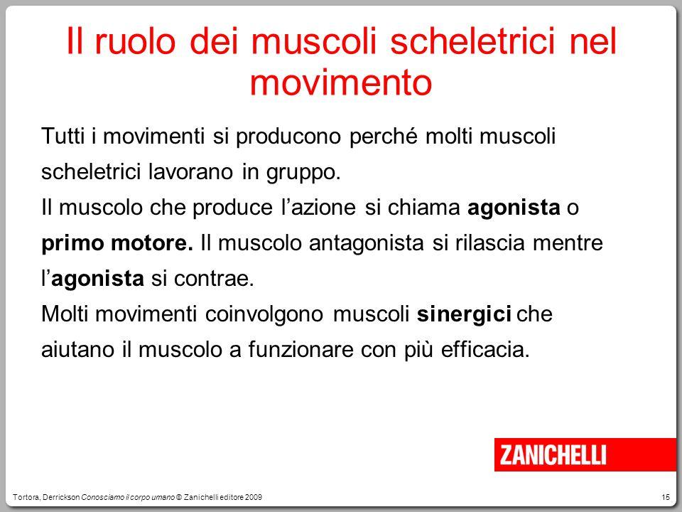 15 Il ruolo dei muscoli scheletrici nel movimento Tutti i movimenti si producono perché molti muscoli scheletrici lavorano in gruppo. Il muscolo che p