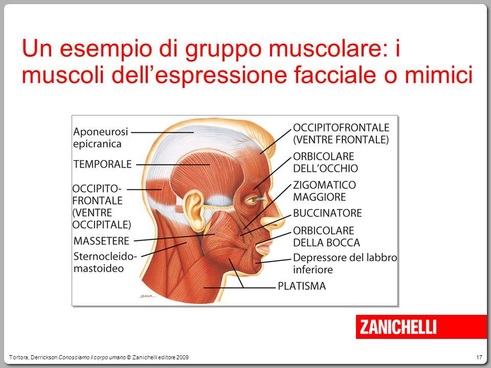 17 Un esempio di gruppo muscolare: i muscoli dell'espressione facciale o mimici Tortora, Derrickson Conosciamo il corpo umano © Zanichelli editore 200