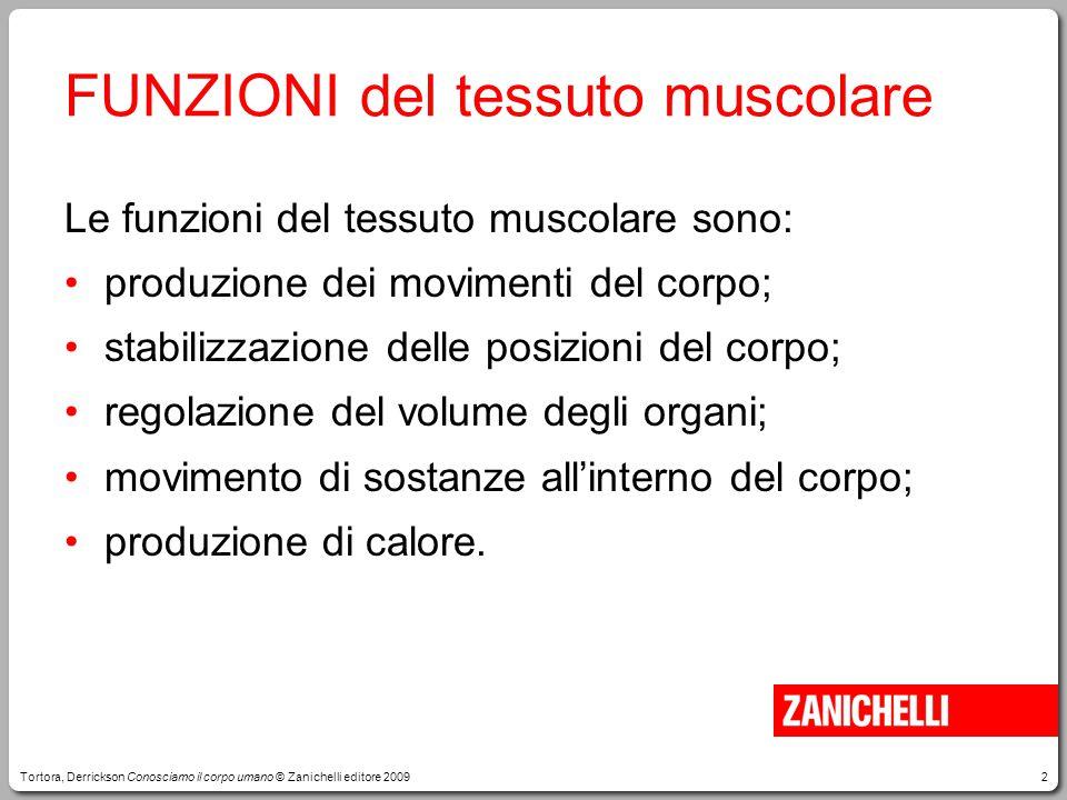 2 Le funzioni del tessuto muscolare sono: produzione dei movimenti del corpo; stabilizzazione delle posizioni del corpo; regolazione del volume degli