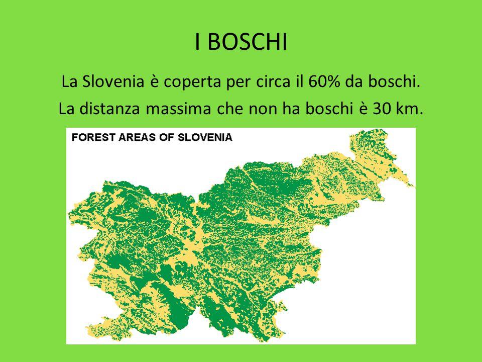 I BOSCHI La Slovenia è coperta per circa il 60% da boschi. La distanza massima che non ha boschi è 30 km.