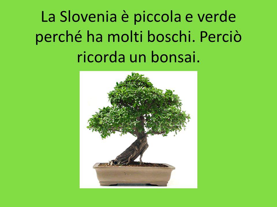 La Slovenia è piccola e verde perché ha molti boschi. Perciò ricorda un bonsai.