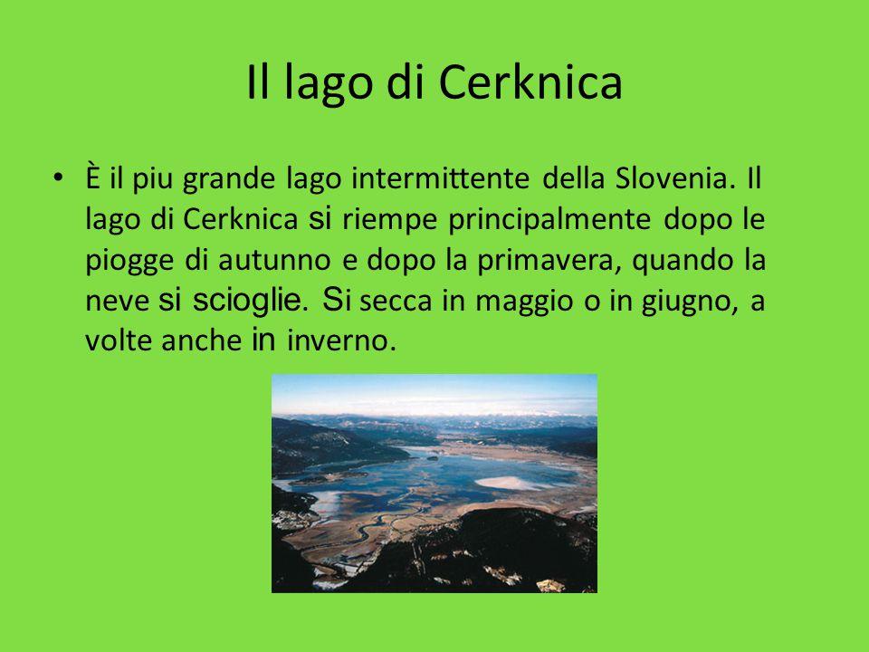 Il lago di Cerknica È il piu grande lago intermittente della Slovenia. Il lago di Cerknica si riempe principalmente dopo le piogge di autunno e dopo l