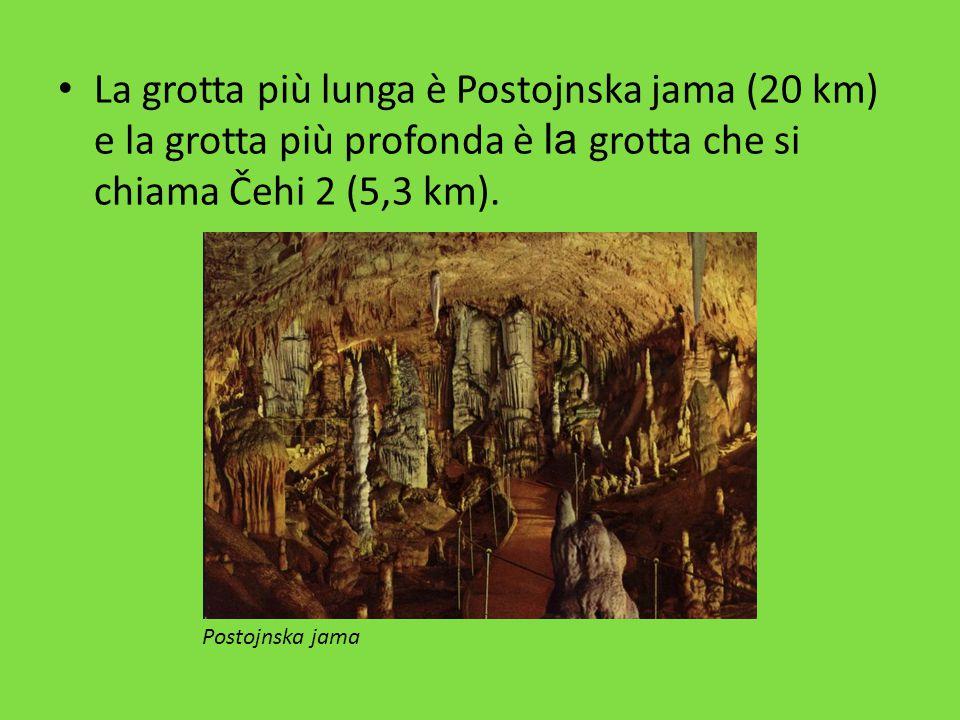 La grotta più lunga è Postojnska jama (20 km) e la grotta più profonda è la grotta che si chiama Čehi 2 (5,3 km). Postojnska jama