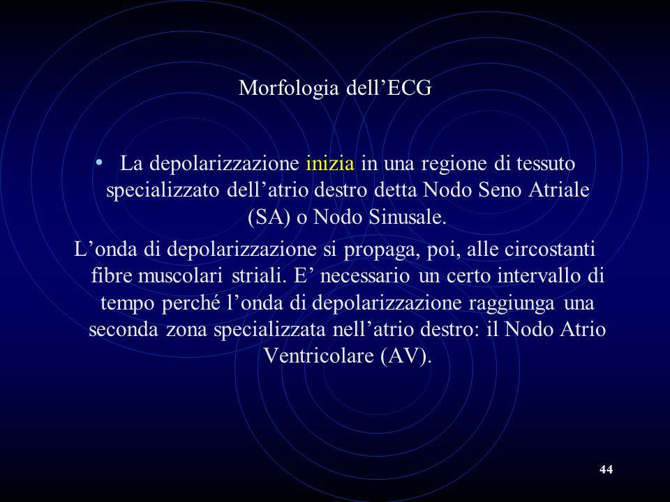 44 Morfologia dell'ECG La depolarizzazione inizia in una regione di tessuto specializzato dell'atrio destro detta Nodo Seno Atriale (SA) o Nodo Sinusa