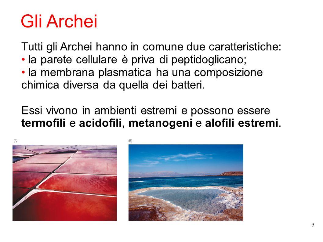 Gli Archei Tutti gli Archei hanno in comune due caratteristiche: la parete cellulare è priva di peptidoglicano; la membrana plasmatica ha una composiz