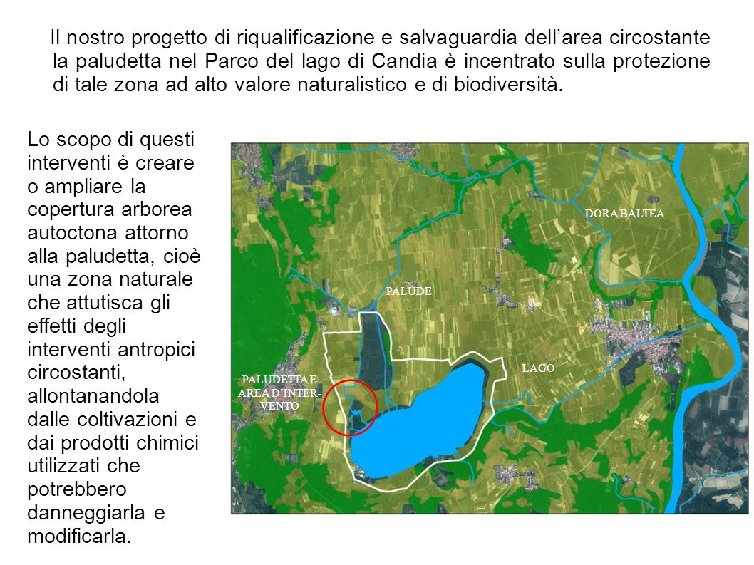 Il nostro progetto di riqualificazione e salvaguardia dell'area circostante la paludetta nel Parco del lago di Candia è incentrato sulla protezione di