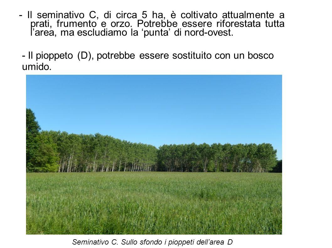 - Il seminativo C, di circa 5 ha, è coltivato attualmente a prati, frumento e orzo. Potrebbe essere riforestata tutta l'area, ma escludiamo la 'punta'