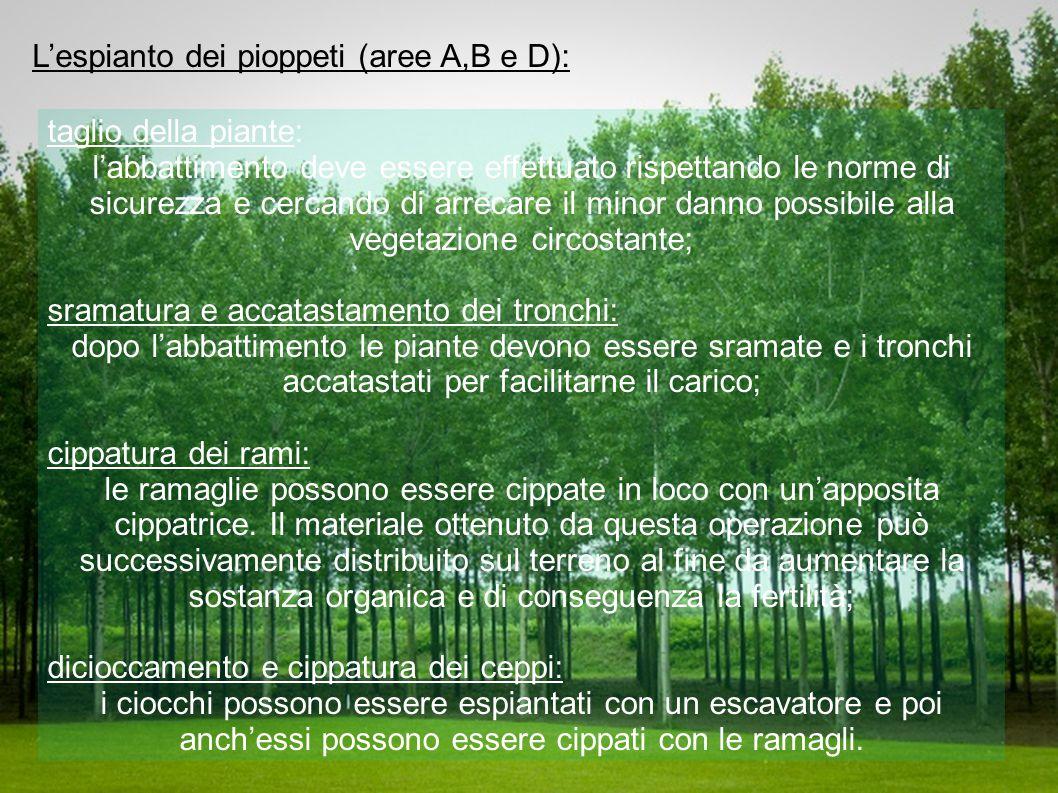 L'espianto dei pioppeti (aree A,B e D): taglio della piante: l'abbattimento deve essere effettuato rispettando le norme di sicurezza e cercando di arr