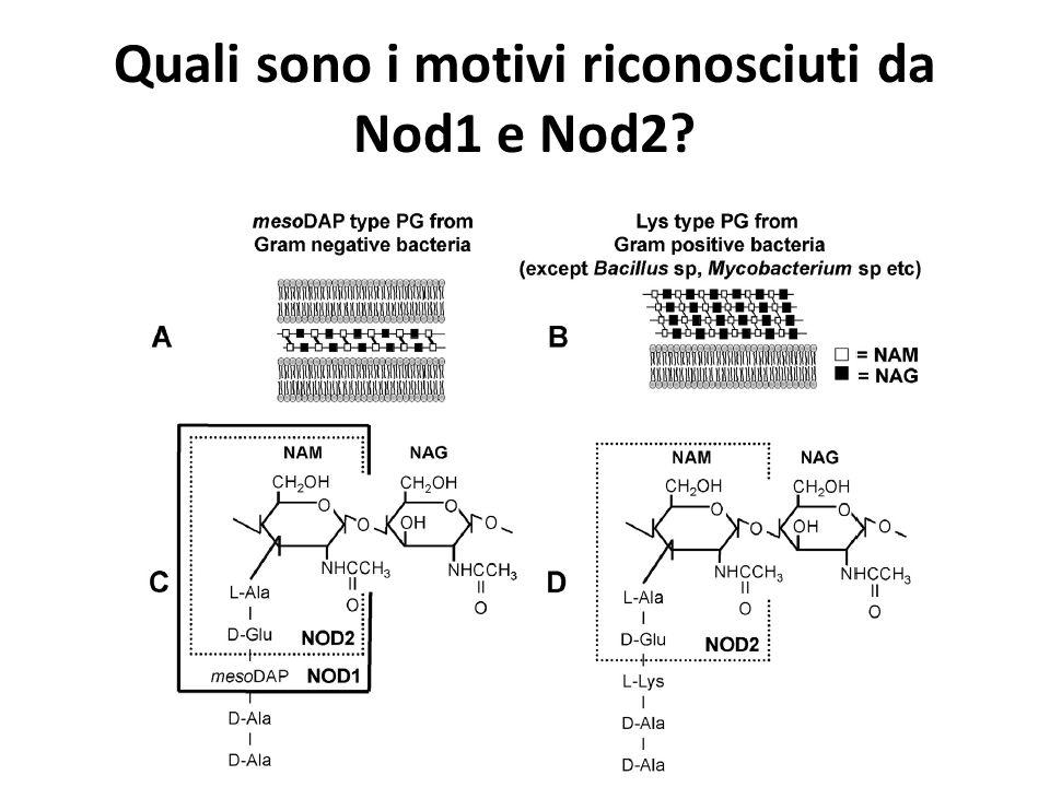 Quali sono i motivi riconosciuti da Nod1 e Nod2?