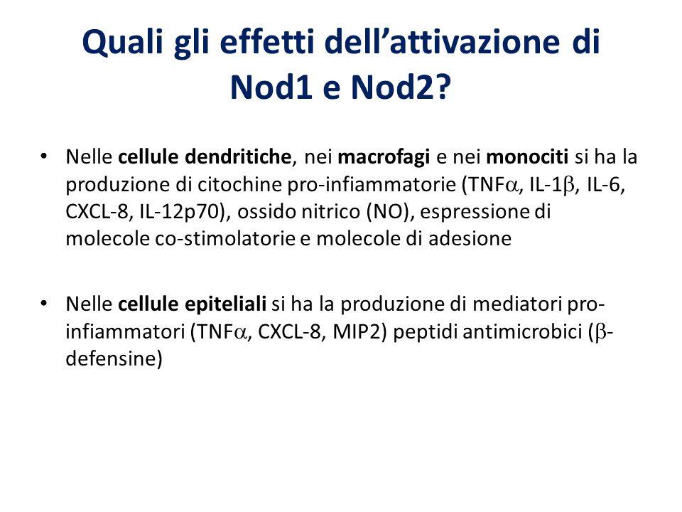 Quali gli effetti dell'attivazione di Nod1 e Nod2? Nelle cellule dendritiche, nei macrofagi e nei monociti si ha la produzione di citochine pro-infiam