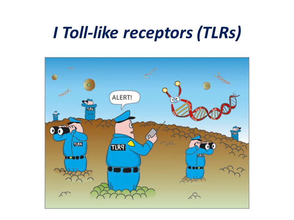 I Toll-like receptors (TLRs)