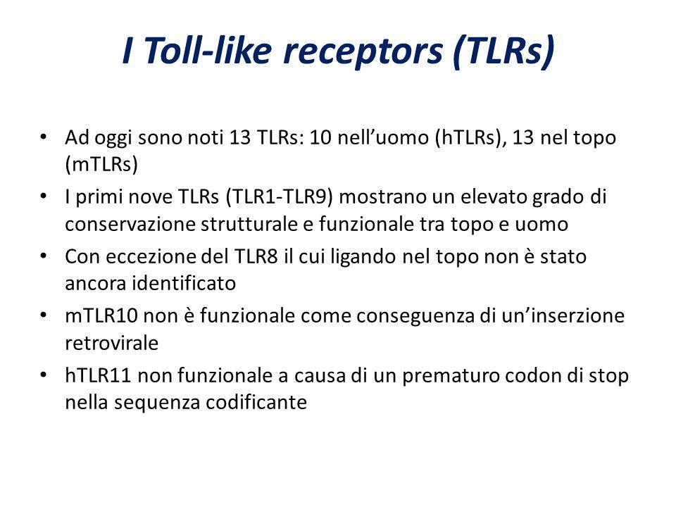 Ad oggi sono noti 13 TLRs: 10 nell'uomo (hTLRs), 13 nel topo (mTLRs) I primi nove TLRs (TLR1-TLR9) mostrano un elevato grado di conservazione struttur