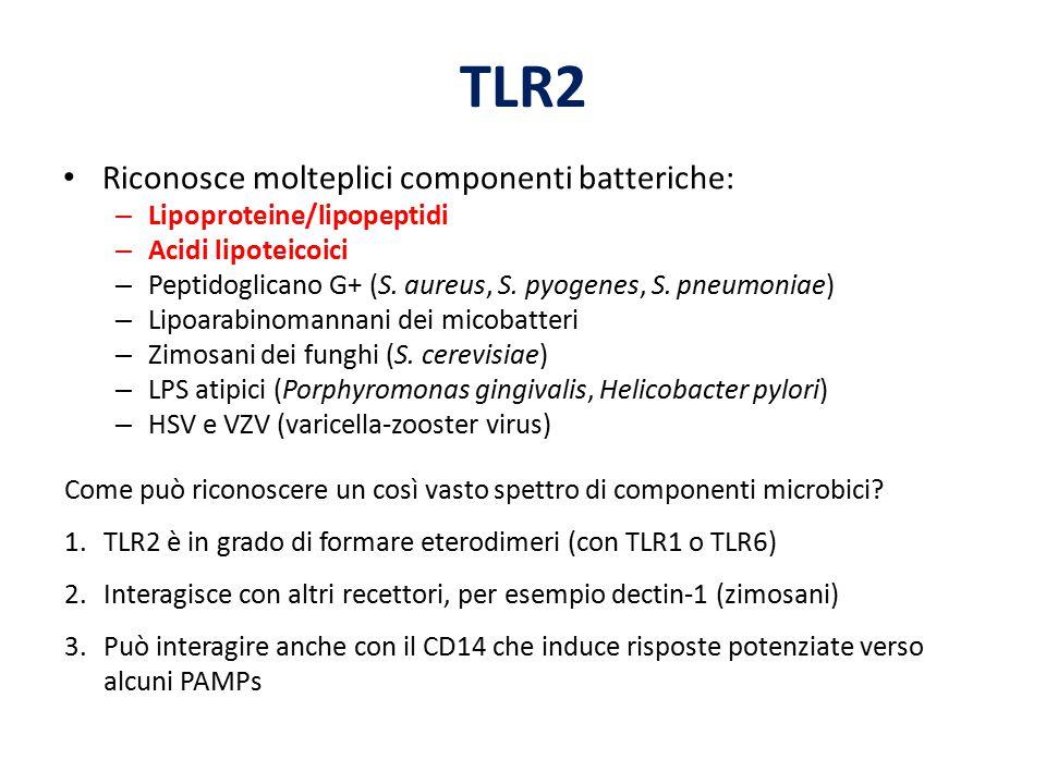 TLR2 Riconosce molteplici componenti batteriche: – Lipoproteine/lipopeptidi – Acidi lipoteicoici – Peptidoglicano G+ (S. aureus, S. pyogenes, S. pneum