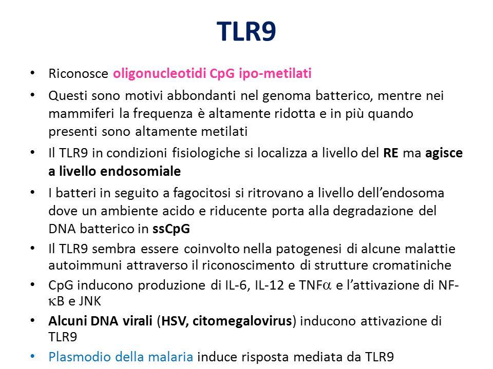 TLR9 Riconosce oligonucleotidi CpG ipo-metilati Questi sono motivi abbondanti nel genoma batterico, mentre nei mammiferi la frequenza è altamente rido