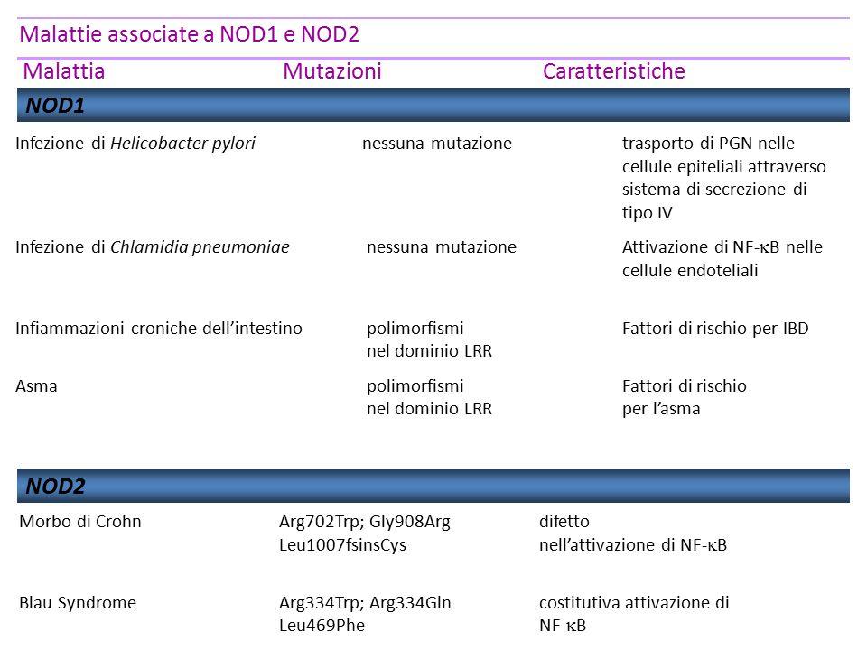Malattie associate a NOD1 e NOD2 MalattiaMutazioniCaratteristiche NOD1 Infezione di Helicobacter pylori nessuna mutazione trasporto di PGN nelle cellu