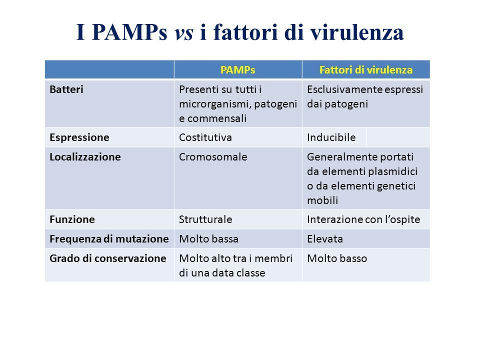 I PAMPs vs i fattori di virulenza PAMPsFattori di virulenza BatteriPresenti su tutti i microrganismi, patogeni e commensali Esclusivamente espressi da