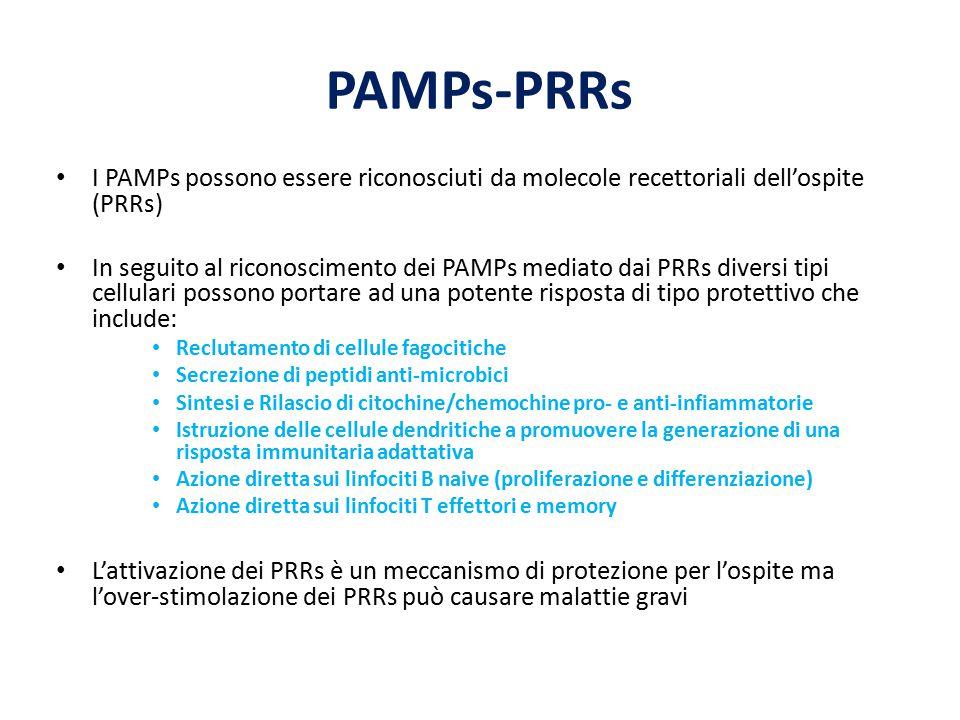 PAMPs-PRRs I PAMPs possono essere riconosciuti da molecole recettoriali dell'ospite (PRRs) In seguito al riconoscimento dei PAMPs mediato dai PRRs div