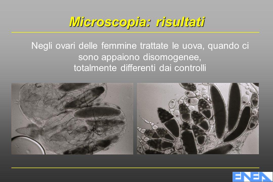 Microscopia: risultati Negli ovari delle femmine trattate le uova, quando ci sono appaiono disomogenee, totalmente differenti dai controlli