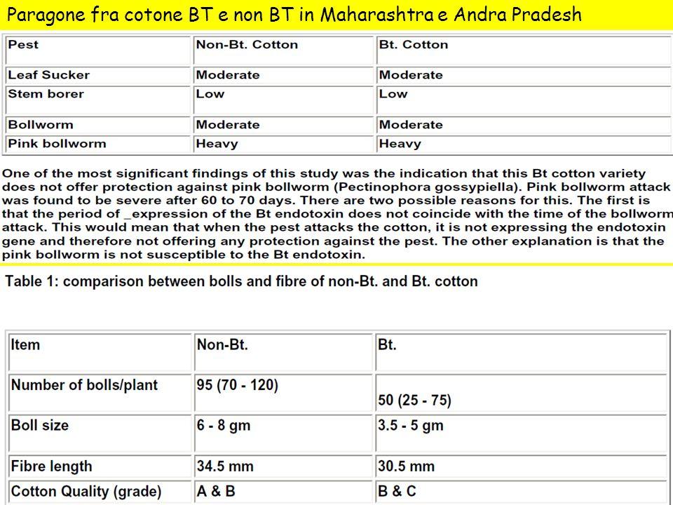 Paragone fra cotone BT e non BT in Maharashtra e Andra Pradesh