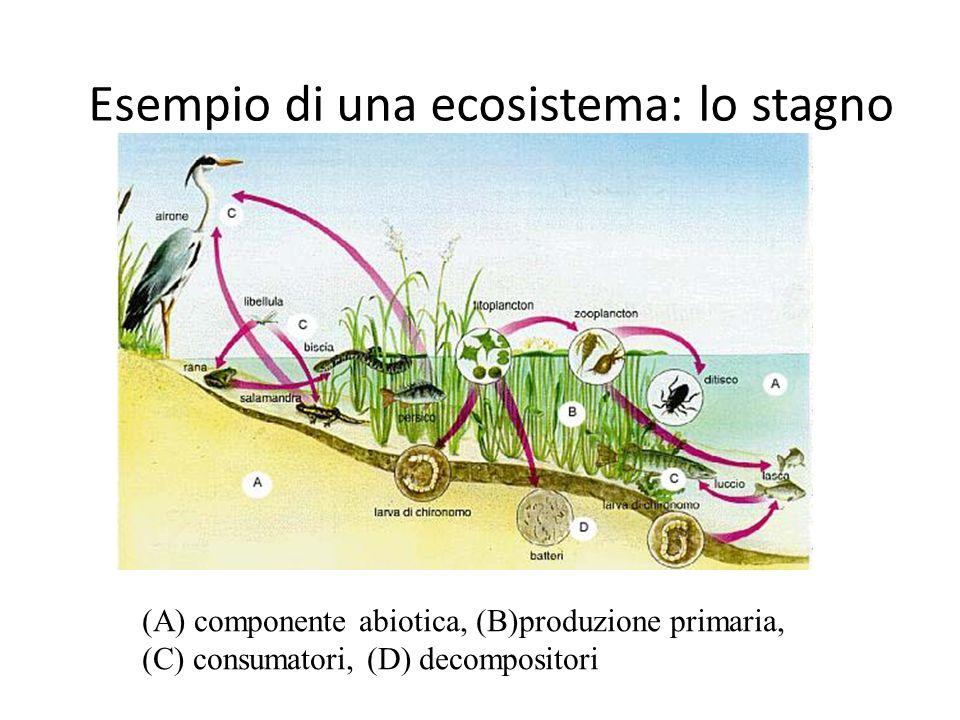 Esempio di una ecosistema: lo stagno (A) componente abiotica, (B)produzione primaria, (C) consumatori, (D) decompositori