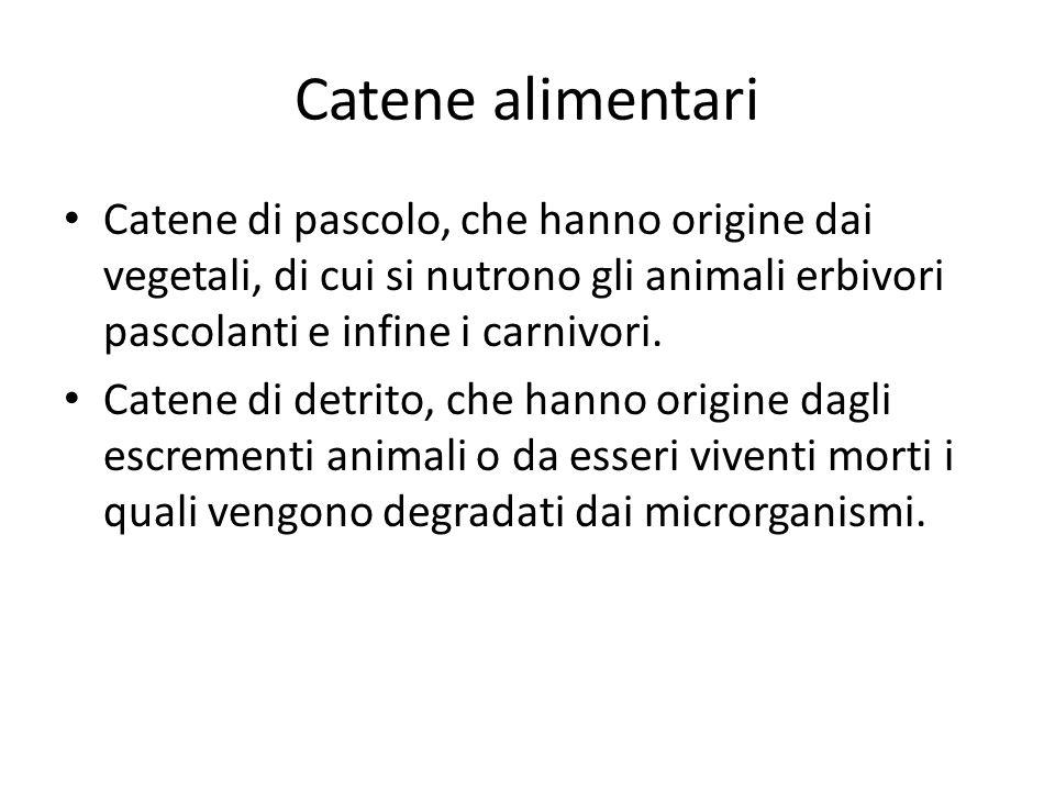 Catene alimentari Catene di pascolo, che hanno origine dai vegetali, di cui si nutrono gli animali erbivori pascolanti e infine i carnivori. Catene di