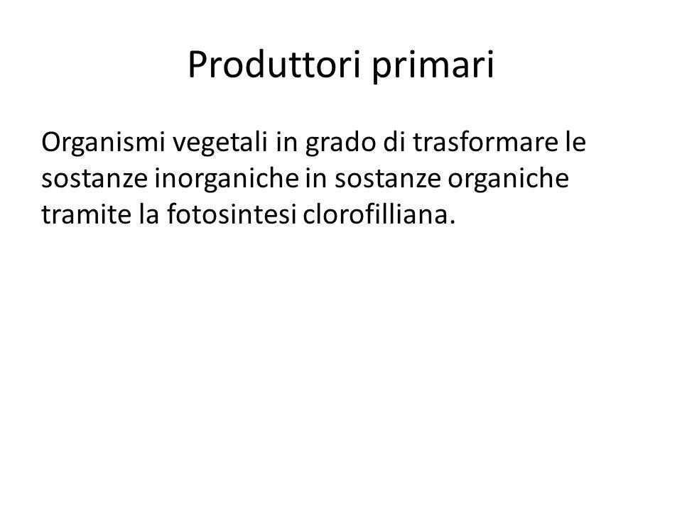 Macroconsumatori Animali che si nutrono di altri organismi: i consumatori primari si nutrono di organismi vegetali, mentre i consumatori secondari e terziari sono animali predatori di altri animali.