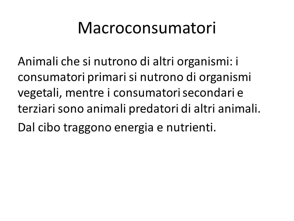 Macroconsumatori Animali che si nutrono di altri organismi: i consumatori primari si nutrono di organismi vegetali, mentre i consumatori secondari e t