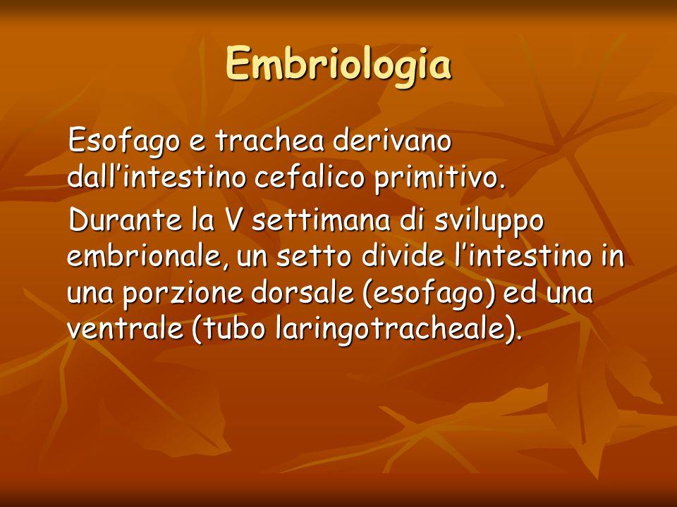 Embriologia Esofago e trachea derivano dall'intestino cefalico primitivo. Esofago e trachea derivano dall'intestino cefalico primitivo. Durante la V s