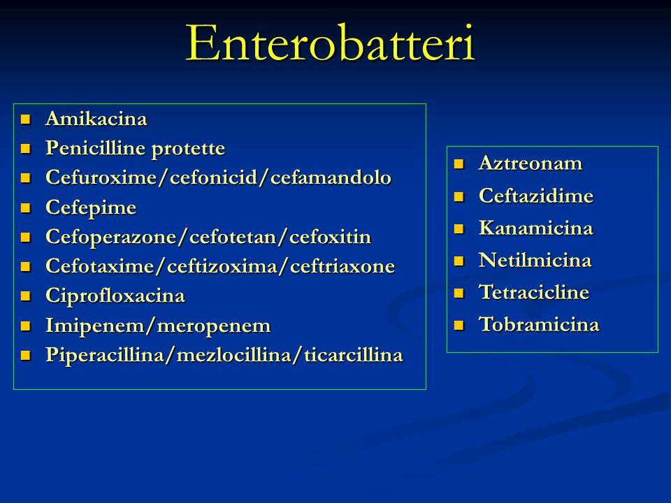 Enterobatteri Amikacina Amikacina Penicilline protette Penicilline protette Cefuroxime/cefonicid/cefamandolo Cefuroxime/cefonicid/cefamandolo Cefepime