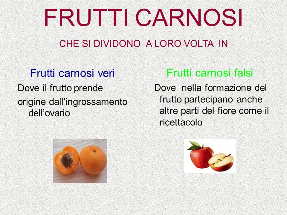 FRUTTI CARNOSI CHE SI DIVIDONO A LORO VOLTA IN Frutti carnosi veri Dove il frutto prende origine dall'ingrossamento dell'ovario Frutti carnosi falsi D