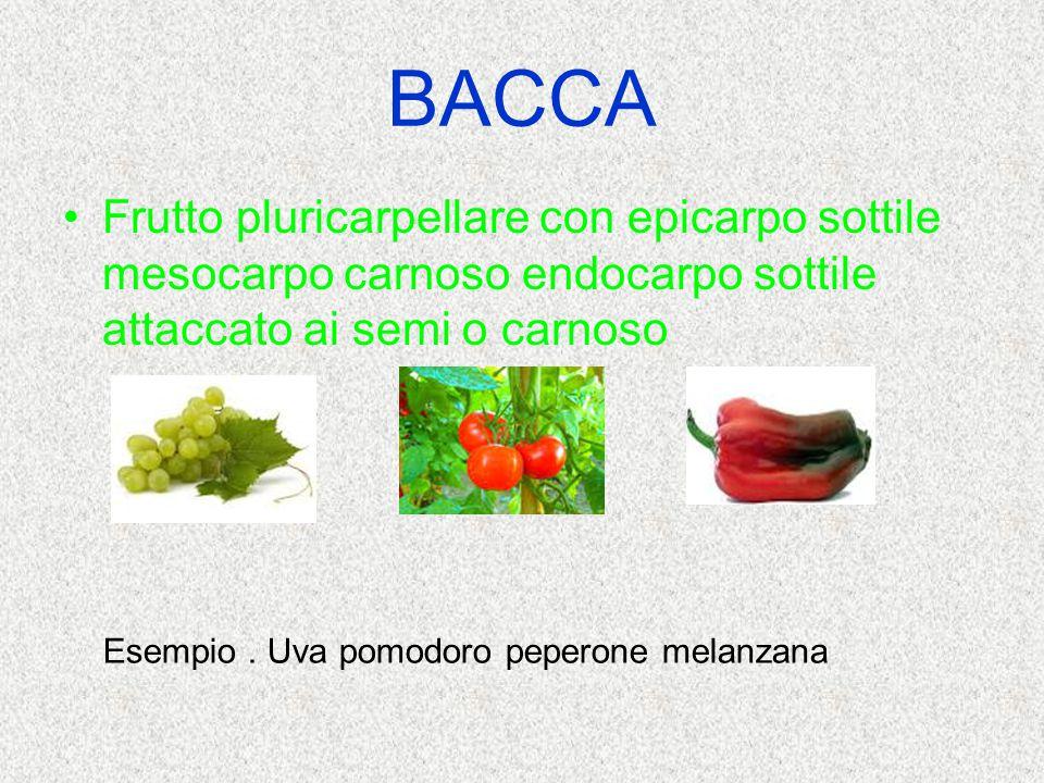 BACCA Frutto pluricarpellare con epicarpo sottile mesocarpo carnoso endocarpo sottile attaccato ai semi o carnoso Esempio. Uva pomodoro peperone melan