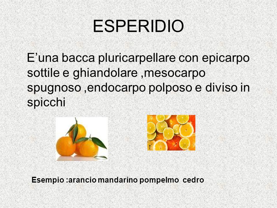 ESPERIDIO E'una bacca pluricarpellare con epicarpo sottile e ghiandolare,mesocarpo spugnoso,endocarpo polposo e diviso in spicchi Esempio :arancio man