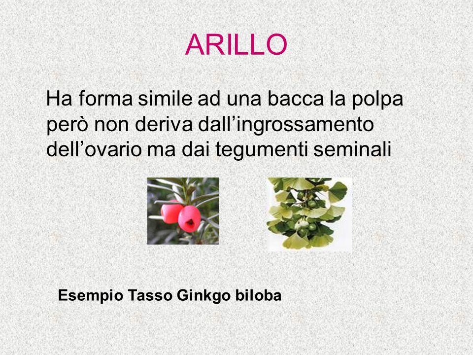ARILLO Ha forma simile ad una bacca la polpa però non deriva dall'ingrossamento dell'ovario ma dai tegumenti seminali Esempio Tasso Ginkgo biloba