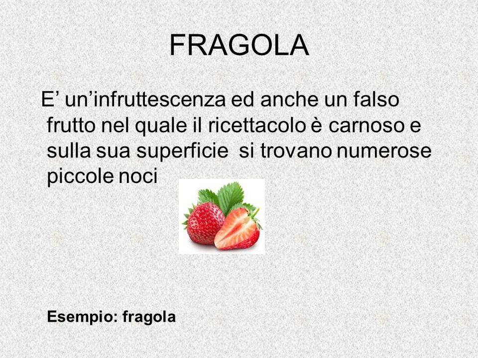 FRAGOLA E' un'infruttescenza ed anche un falso frutto nel quale il ricettacolo è carnoso e sulla sua superficie si trovano numerose piccole noci Esemp