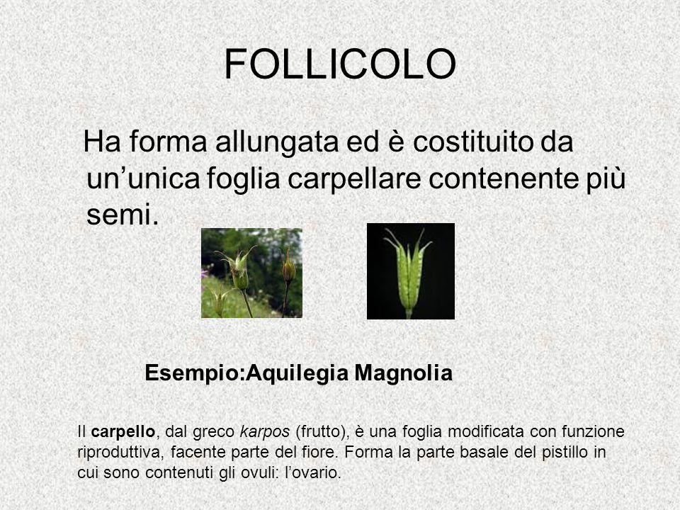 FOLLICOLO Ha forma allungata ed è costituito da un'unica foglia carpellare contenente più semi. Esempio:Aquilegia Magnolia Il carpello, dal greco karp