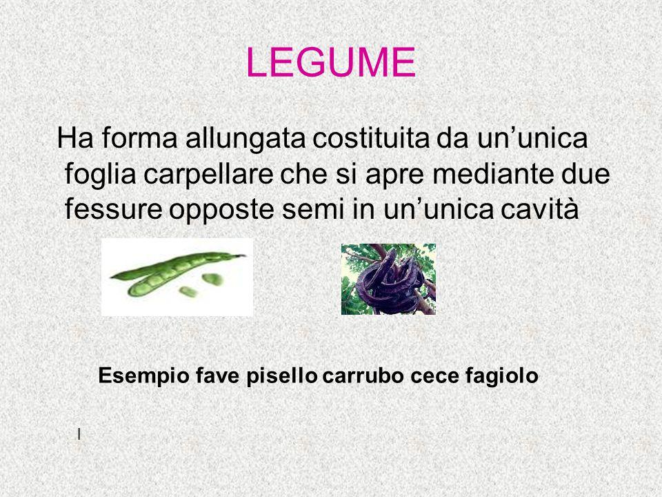 LEGUME Ha forma allungata costituita da un'unica foglia carpellare che si apre mediante due fessure opposte semi in un'unica cavità Esempio fave pisel