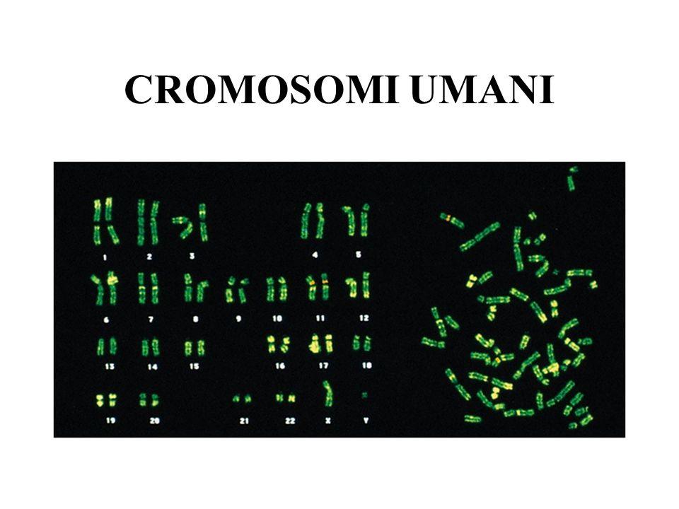 CROMOSOMI UMANI