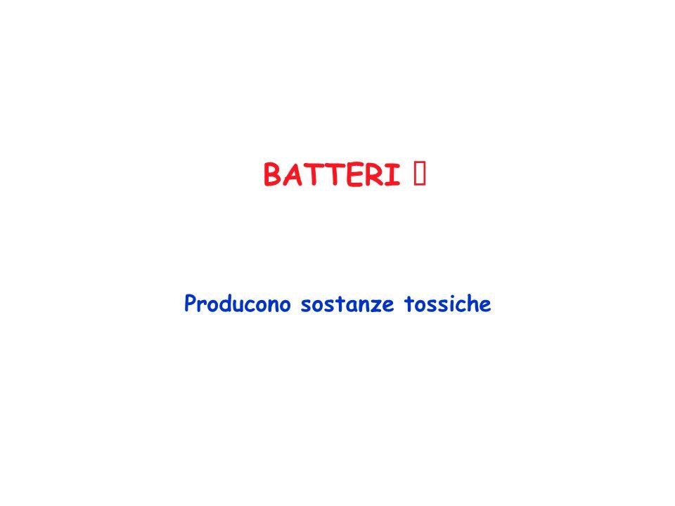 BATTERI Producono sostanze tossiche