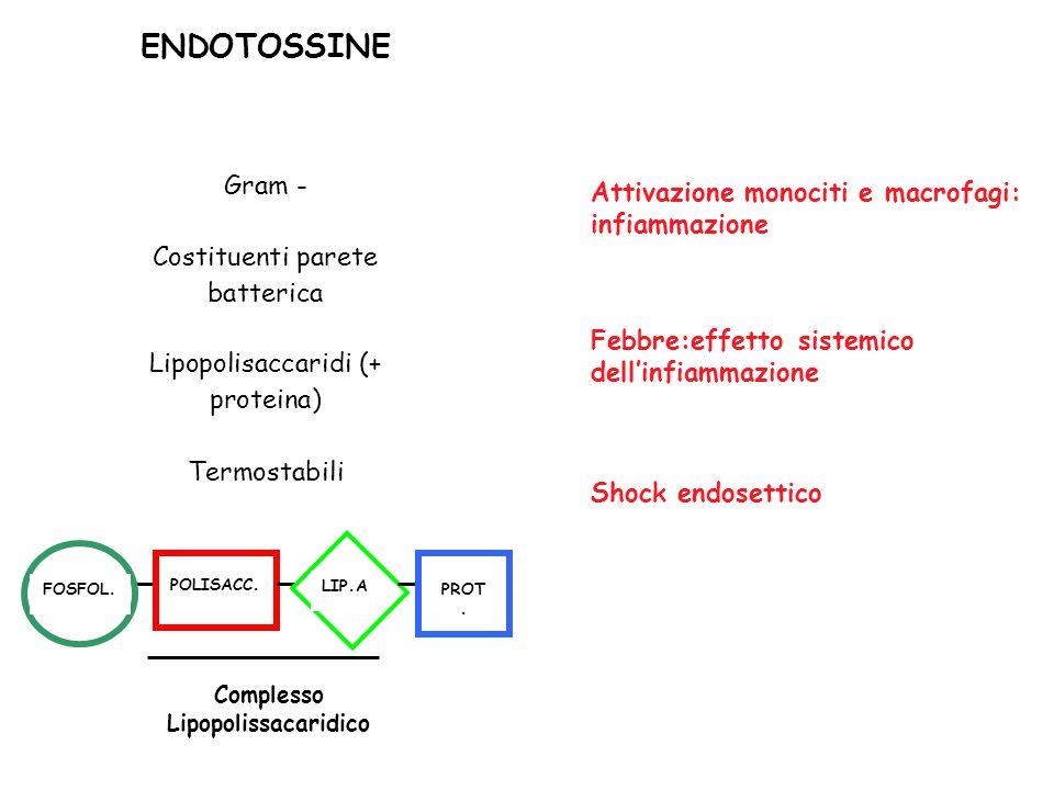 ENDOTOSSINE Gram - Costituenti parete batterica Lipopolisaccaridi (+ proteina) Termostabili FOSFOL. POLISACC. LIP.A PROT. Complesso Lipopolissacaridic