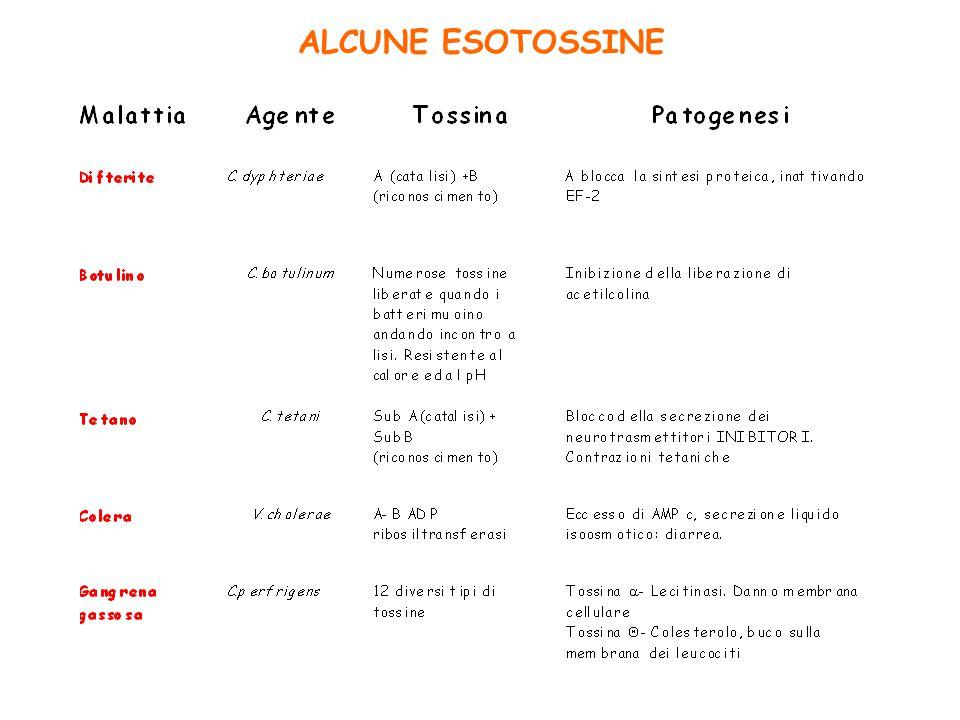 ALCUNE ESOTOSSINE
