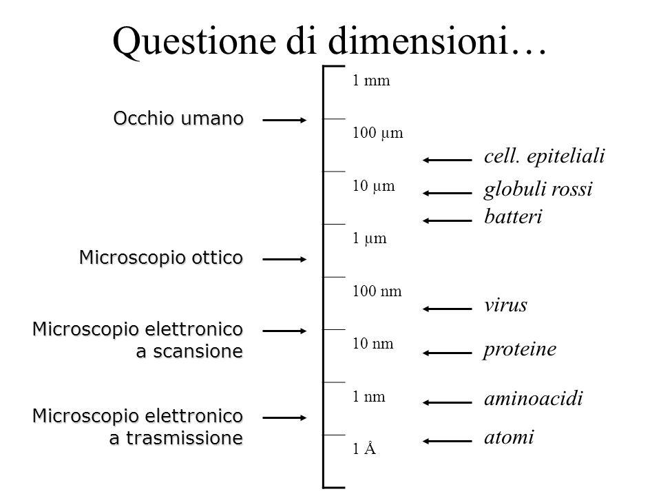 Questione di dimensioni… 1 mm 100 µm 10 µm 1 µm 100 nm 10 nm 1 nm 1 Å Occhio umano Microscopio ottico Microscopio elettronico a trasmissione cell. epi