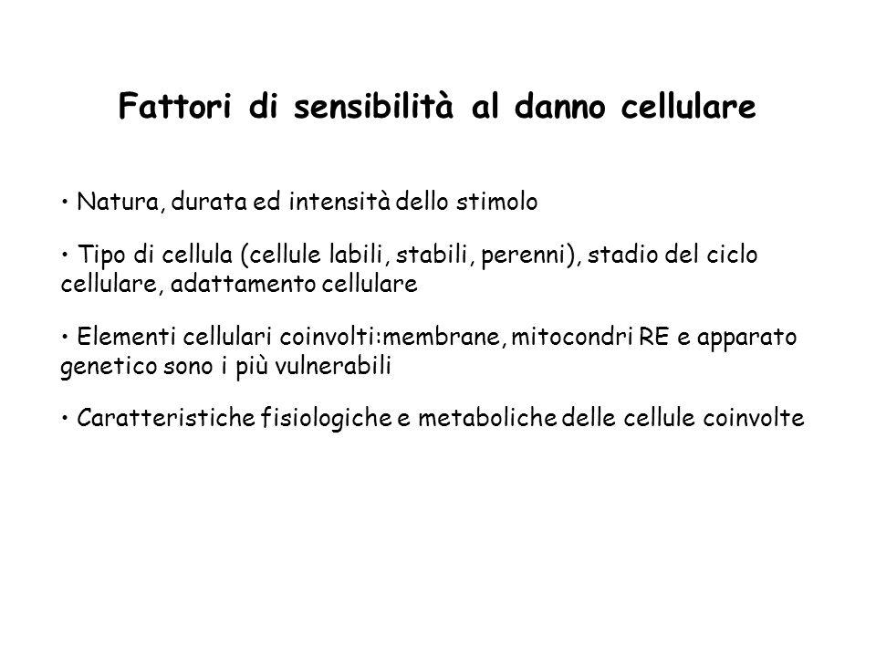 Fattori di sensibilità al danno cellulare Natura, durata ed intensità dello stimolo Tipo di cellula (cellule labili, stabili, perenni), stadio del cic