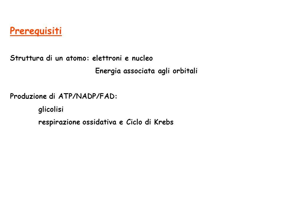 Prerequisiti Struttura di un atomo: elettroni e nucleo Energia associata agli orbitali Produzione di ATP/NADP/FAD: glicolisi respirazione ossidativa e