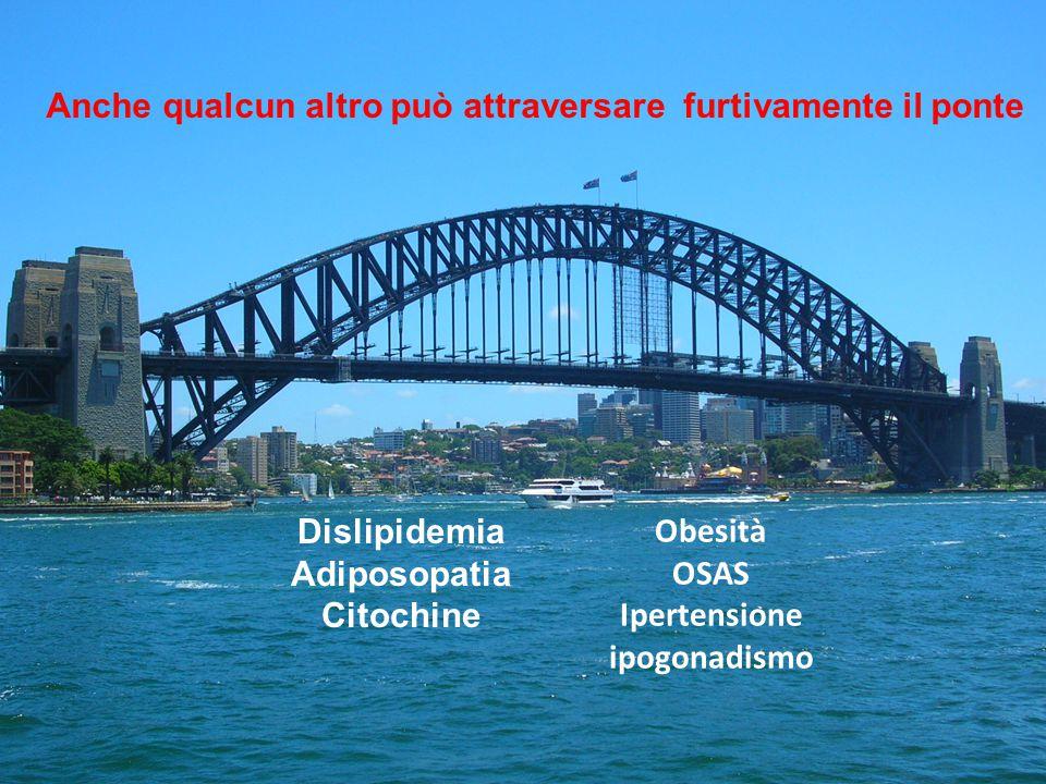 Obesità OSAS Ipertensione ipogonadismo Anche qualcun altro può attraversare furtivamente il ponte Dislipidemia Adiposopatia Citochine